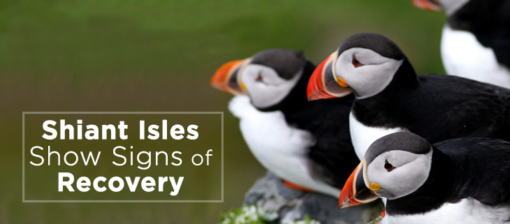 island-conservation-shiant-isles-seabird-feat