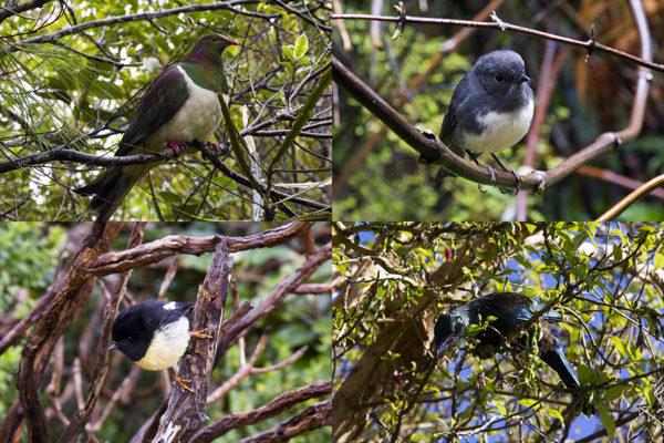 island-conservation-ulva-island
