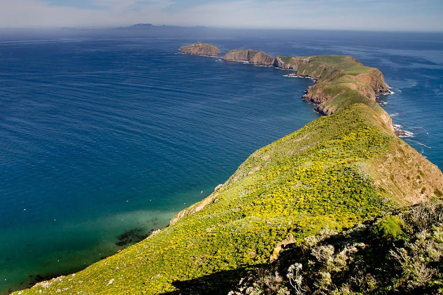 island watch conservation science anacapa california preventing extinctions