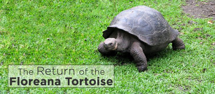 island-conservation-floreana-tortoise-feat