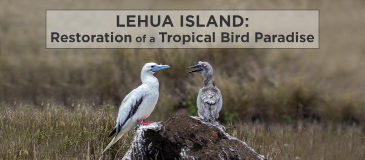 island conservation lehua rat poison drop pilot whales