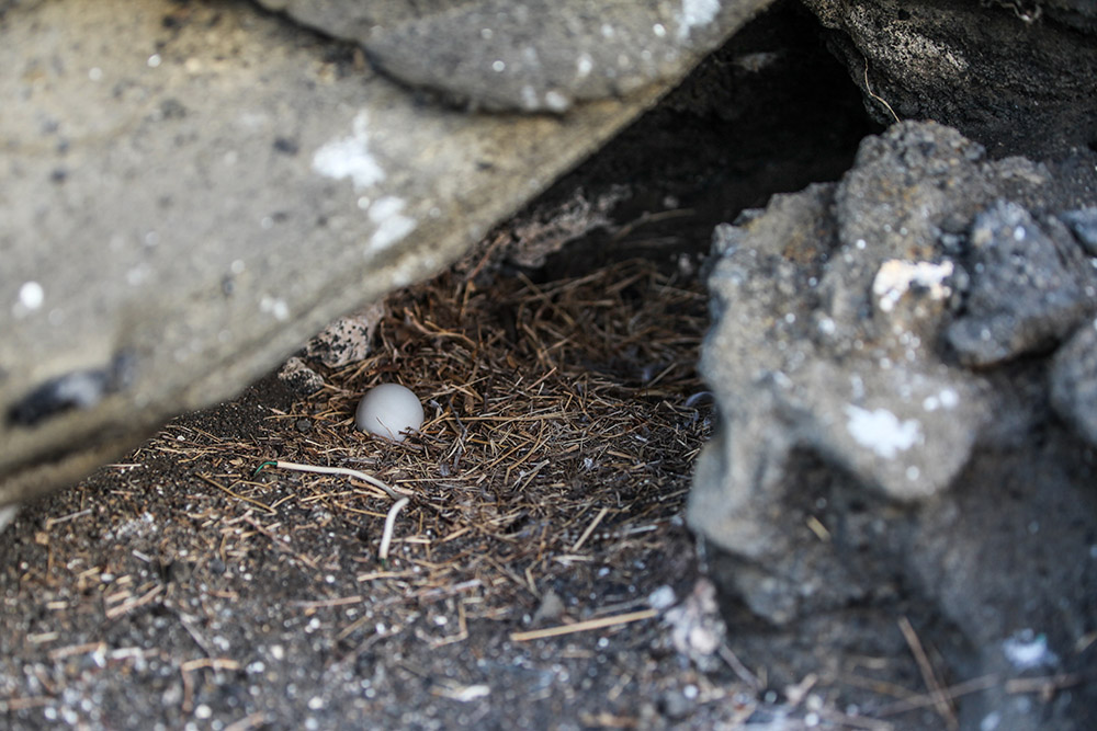 island-conservation-lehua-rat-poison-drop-pilot-whales-seabird-egg