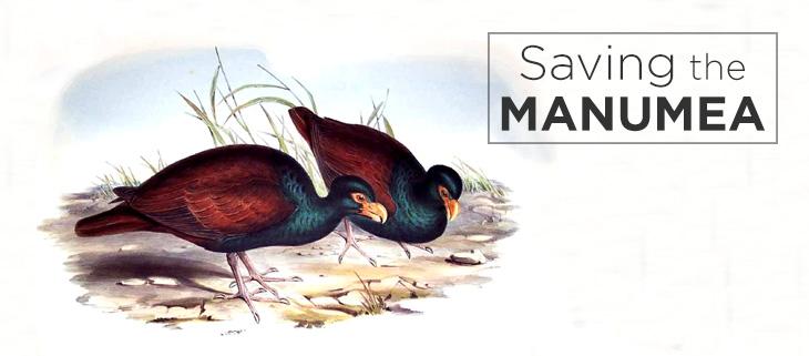 island-conservation-manumea-feat