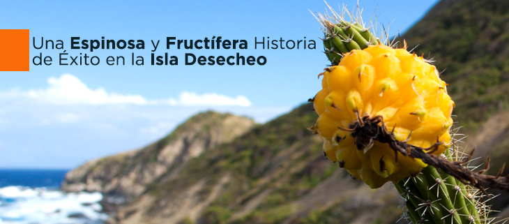 island-conservation-preventing-extinctions-Harrisias-mature-fruit-Desecheo-feat