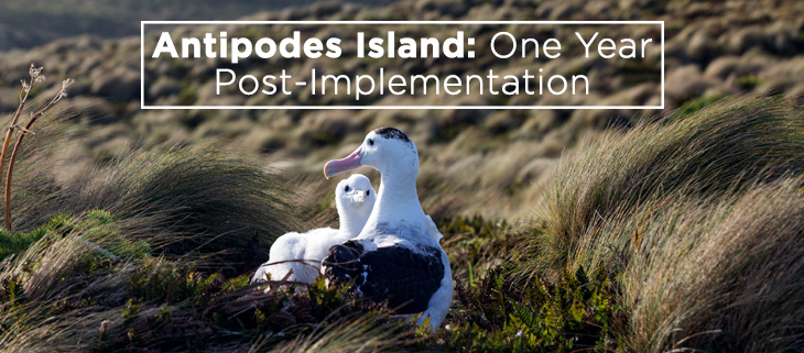 island-conservation-antipodes-island-feat