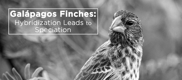 island-conservation-galapagos-finch-speciation-feat