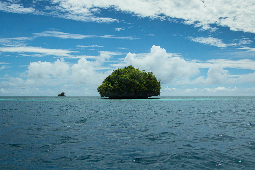 island-conservation-preventing-extinctions-giving-tuesday-Palau