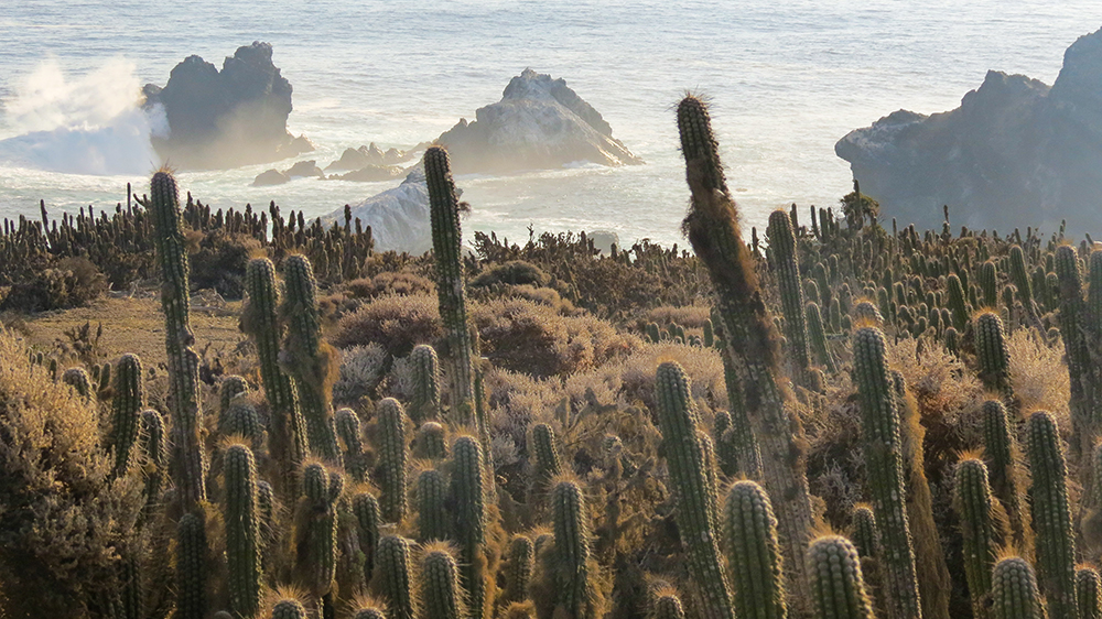 island-conservation-preventing-extinctions-giving-tuesday-chile