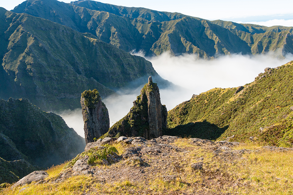 island-conservation-preventing-extinctions-giving-tuesday-island-fog