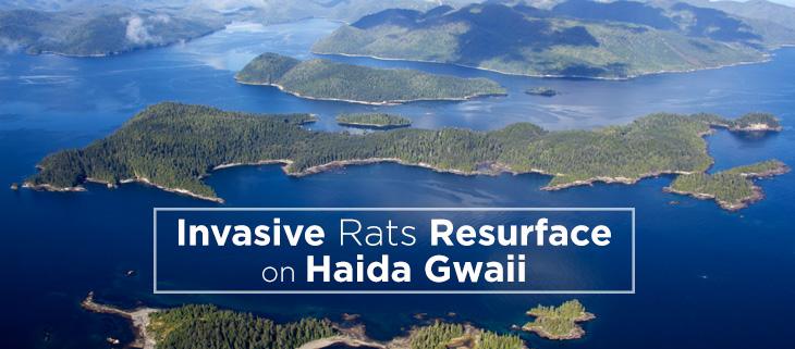 island-conservation-haida-gwaii-feat
