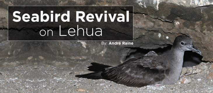 island-conservation-preventing-extinctions-lehua-island-hawaii-seabird-revival-feat