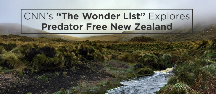 island-conservation-predator-free-new-zealand-feat
