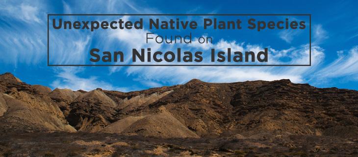 island-conservation-san-nicolas-island-feat