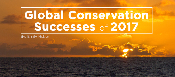 island-conservation-conservation-success-2017-feat