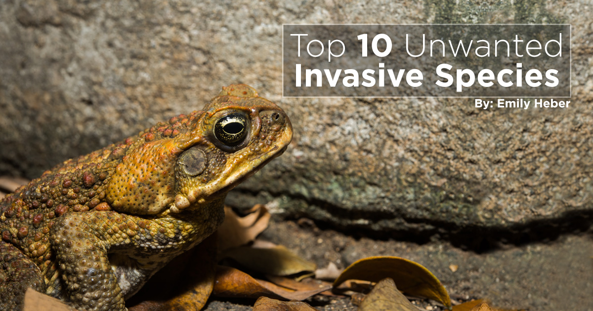 Island Conservation The 10 Most Unwanted Invasive Species Island