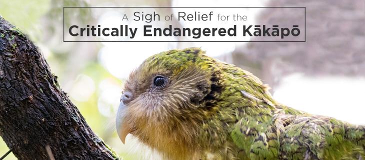 island-conservation-kakapo