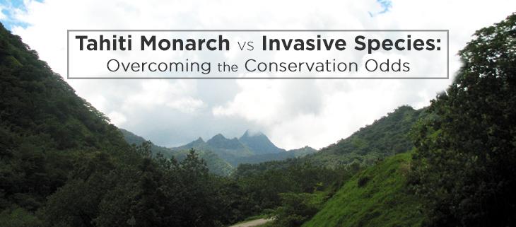 island-conservation-tahiti-monarch-feat
