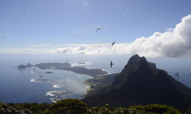 island-conservation-lord-howe-island