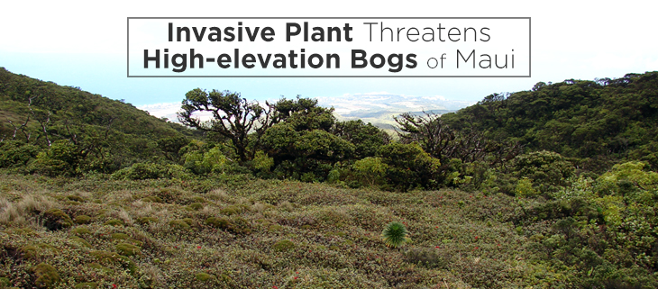island-conservation-hawaii-maui-bog-invasive-species