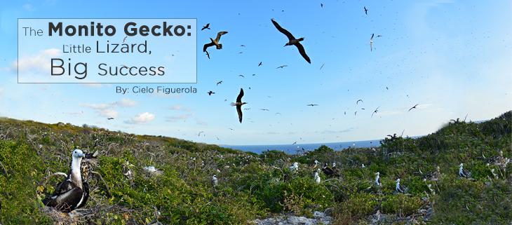 island-conservation-monito-island-monito-gecko-feat