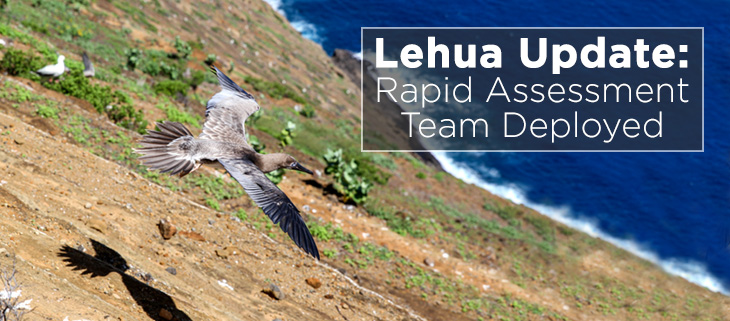 island-conservation-lehua-rat-poison-drop-pilot-whales-rat-detected-feat