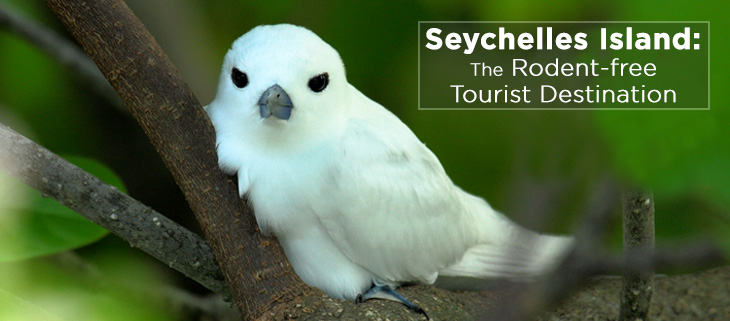 island-conservation-seychelles-island-rat-free-tourism-feat