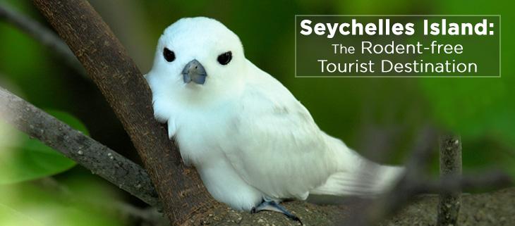 island-conservation-seychelles-island-rat-free-tourism-feat