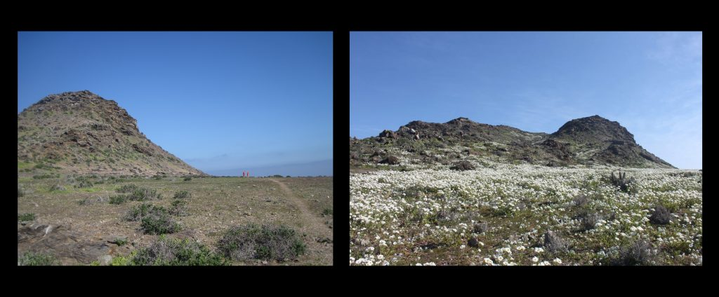 island-conservation-preventing-extinctions-choros-before-after-2