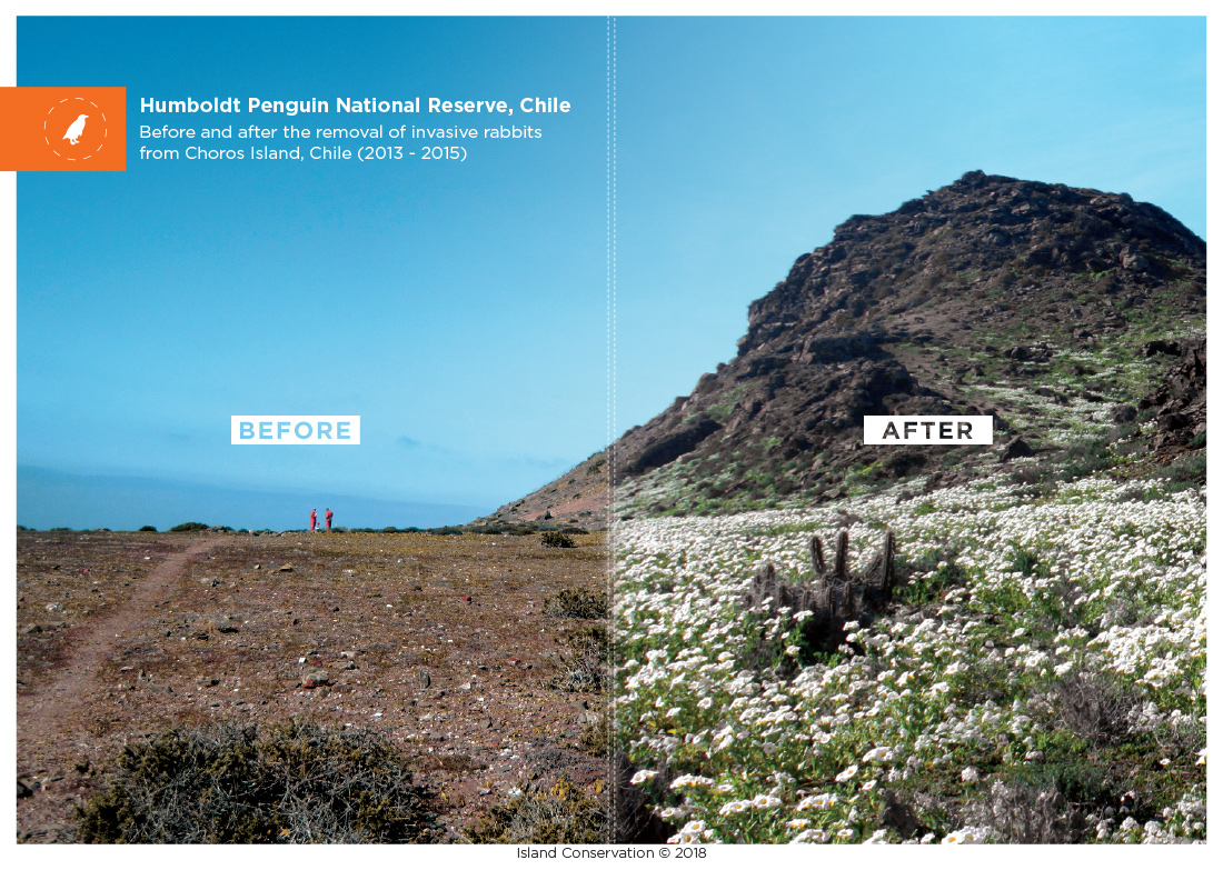Humboldt Penguin National Reserve Chile Before and after
