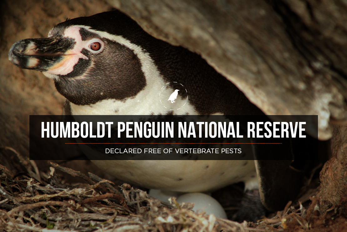 Humboldt Penguin National Reserve