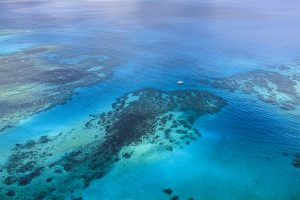 island-conservation-invasive-species-preventing-extinctions-Great-Barrier-Reef