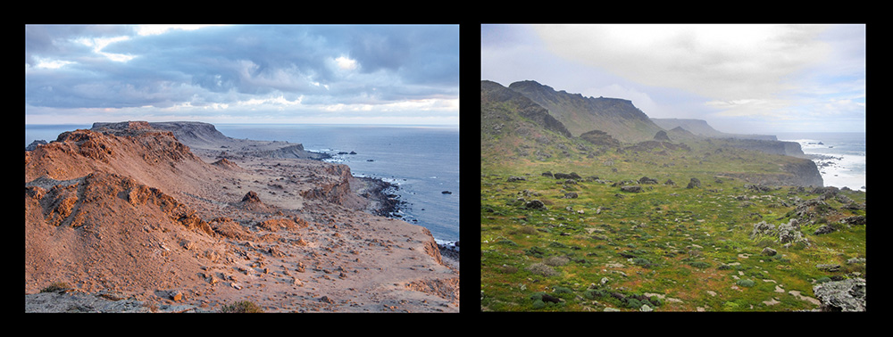 island-conservation-invasive-species-preventing-extinctions-before-after