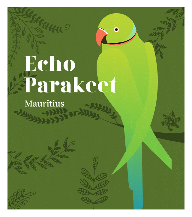 island-conservation-invasive-species-preventing-extinctions-echo-parakeet
