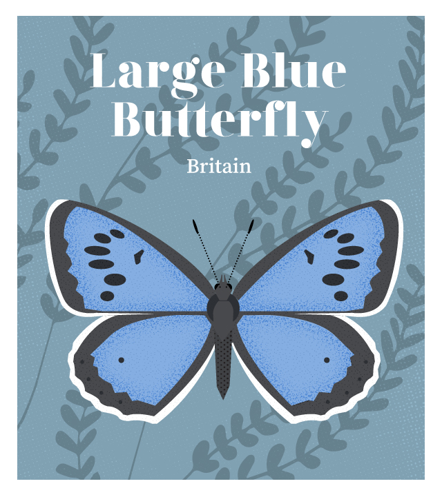 island-conservation-invasive-species-preventing-extinctions-large-blue-butterfly
