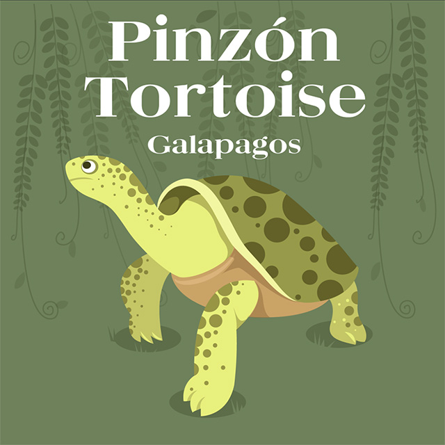 island-conservation-invasive-species-preventing-extinctions-pinzon-tortoise