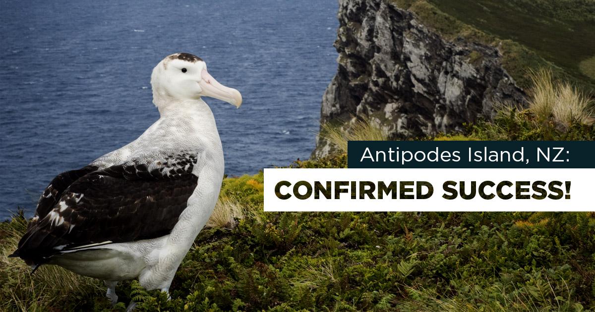 island conservation antipodes new zealand albatross