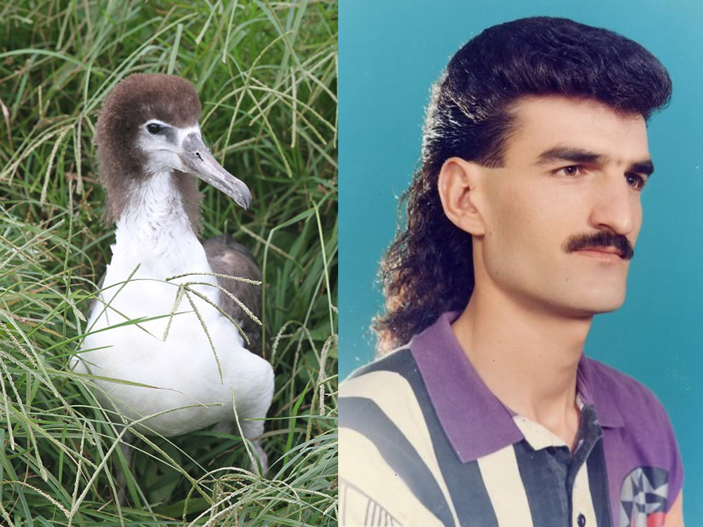 island-conservation-invasive-species-preventing-extinctions-albatross-juvenille-mullet