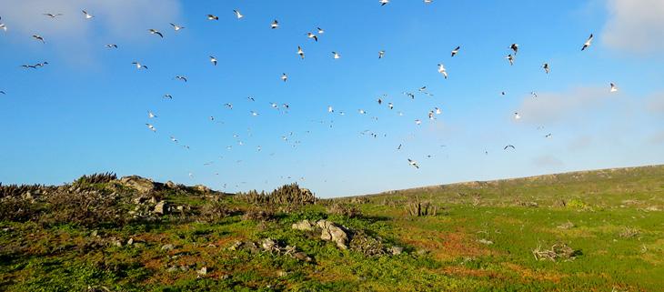 island-conservation-invasive-species-preventing-extinctions-biodiversity-conservation-seabird-flock-feat