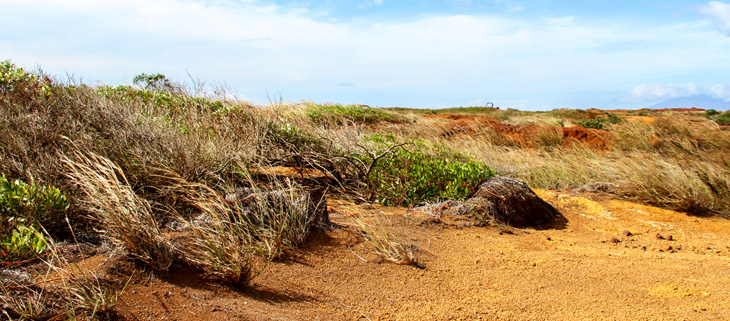 island-conservation-invasive-species-preventing-extinctions-kahoolawe-restoration