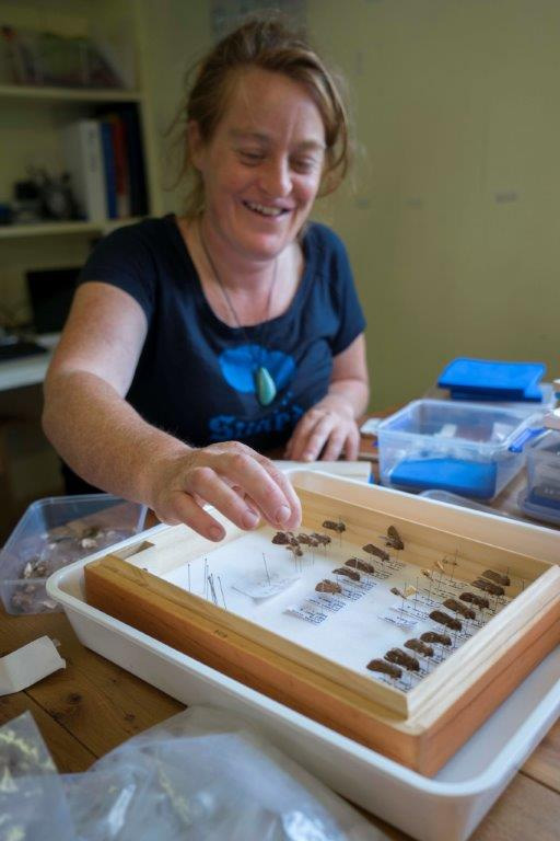 island-conservation-invasive-species-preventing-extinctions-moth-collection-identification