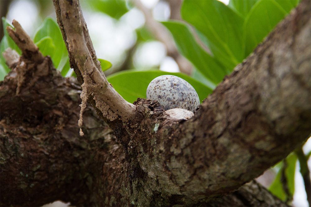 island-conservation-invasive-species-preventing-extinctions-palmyra-atoll-eradication-mosquito-egg