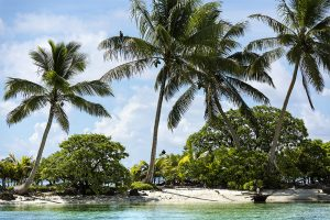 island-conservation-preventing-extinctions-invasive-species-Palmyra-Atoll-Trees