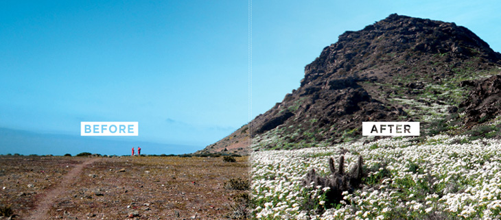 island-conservation-invasive-species-preventing-extinctions-choros-before-after-feat