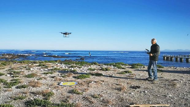 island-conservation-invasive-species-preventing-extinctions-dyer-island-drone-technology