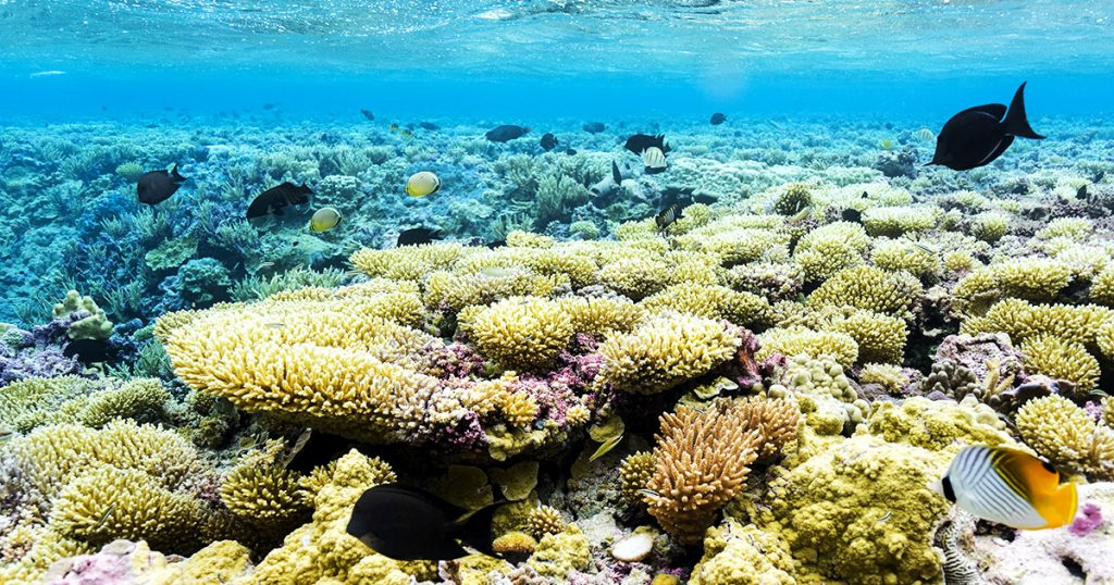 island-conservation-invasive-species-preventing-extinction-coral-reefs-palmyra-atoll-fb
