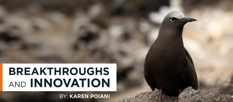 island-conservation-invasive-species-preventing-extinctions-breakthrough-innovation