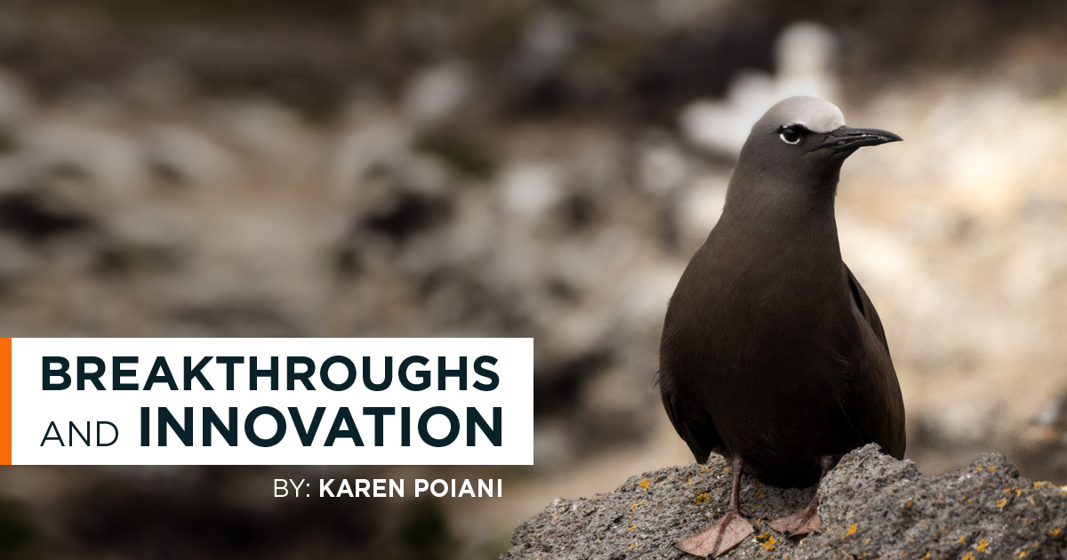 island-conservation-invasive-species-preventing-extinctions-breakthrough-innovation
