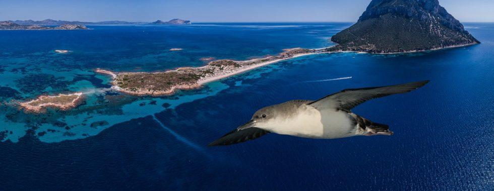 Island-conservation-preventing-extinctions-science-NGO-Tavolara-Italy-Italia
