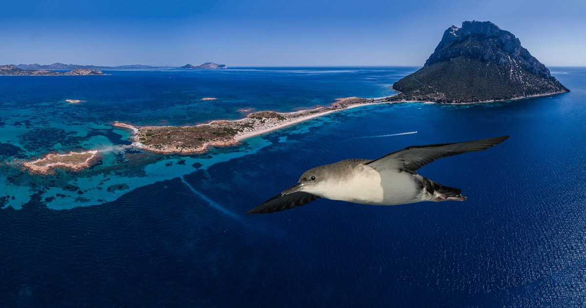 Island-conservation-preventing-extinctions-science-NGO-Tavolara-Italy-Italia