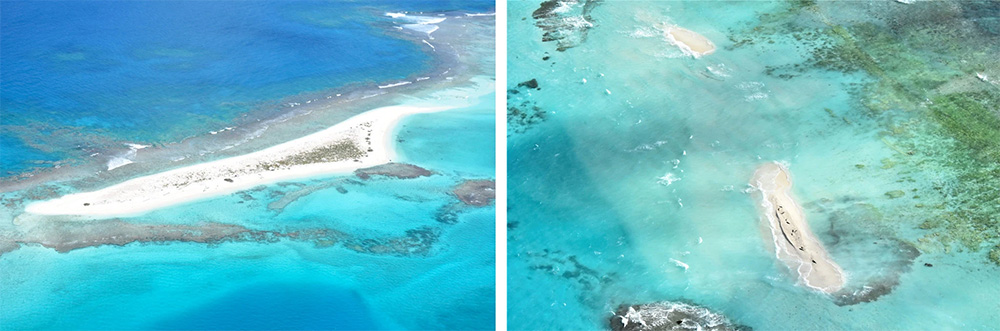 island-conservation-invasive-species-preventing-extinctions-east-island-climate-change-hurricane